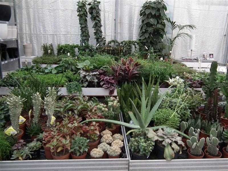 Stueplanter - skanderborg-plantecenter.dk