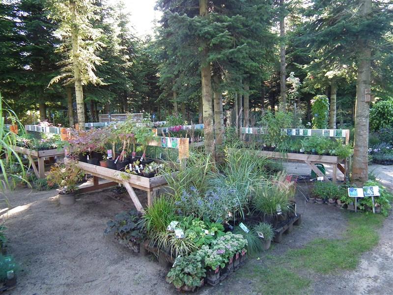 Vi har et stort udvalg af stauder, græsser og impuls stauder